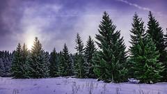 The Quiescent Serenity of Frigid Winter Days III. (icarium82) Tags: plant landscape winter travel nature sonydscrx1rm2 erzgebirge forest snow landschaft pflanze schnee wald clouds sun czechrepublic carlzeissplanar35mmf2