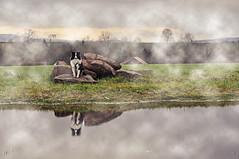 Nass ist es in Wald und Feld.... (Uli He - Fotofee) Tags: ulrike ulrikehe uli ulihe ulrikehergert hergert nikon nikond90 fotofee plätzer steinbach klausmarbach burghaun radweg matsch feld nass nässe wald bäume baum fleur sheltie shetlandsheepdog