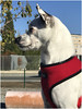 7817-ORGULLO PERRUNO (--MARCO POLO--) Tags: perros animales mascotas