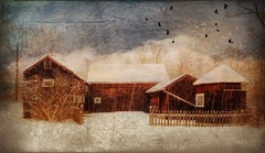 Let it Snow...Again, Weir Farm, 2017 (augenbrauns) Tags: painterly snowing snowy snow nationalhistoricsite olympusomdem1ii wilton distressedfxholiday distressedfx barn farm weirfarm