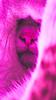 Hide and Seek (Senad Kajić) Tags: senadkajic catsofinstagramnot cutepetclub hobbikats catsofinstagram cat squad ilovemycat daily picoftheday feature orientalcat gato meow monday adorable cute kitten instacat 📷 catmeme cats catmemes catstagram kitty catlover catoftheday catsagram instagramcats catlovers instacats