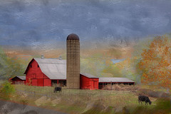 Red Barn with Cows (LarryHB) Tags: driving cows red photography horizontal hdr farm field pastures rural road capegirardeaucounty missouri midwest barn bins fence 2016 landscape larrybraunphotography