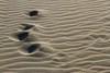 Tout s'efface peu à peu...(Everything gradually fades...) (Larch) Tags: sand lines vent wind trace plage beach footmark sète hérault languedocroussillon france hiver winter tamontane zen méditation meditation plagedesète sètebeach