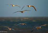 The Birds (jeffcoleman372) Tags: sea birds flight light gulls