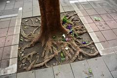 Contained tree (Taipei, Taiwan 2017) (paularps) Tags: paularps arps 2017 2018 taiwan republicofchina asia azië nature culture chinese reizen travel fareast 101building taipei taipeh dumplings xiaolongbao dintaifung