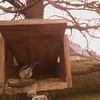 01-20180108_095952-00 (www.cabane-oiseaux.org) Tags: 2018010809h012018010809595200jpg 20180108 09h