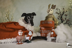 Dear Santa (houndstooth4) Tags: dog greyhound flattery dogchal ddc odc 4952 52weeksfordogs