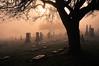 Layabouts (Prestidigitizer) Tags: cemeteriesnsculptures sunrisesunset vancouver pentaxk3 sigma18250mmf3563dcmacrohsm fog foggy mist morning sunrise graveyard graves tombstones tree silhouette frasercemetery