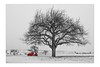 das rote Auto (SonjaS.) Tags: baum tree rot auto winter schnee snow theredcar car winterwelt sw color red bewegt