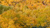 Tapestry of Autumn (chasingthelight10) Tags: canyons landscapes travel events photography creeks forests foliage nature mountains places california bishopcreekcanyon easternsierranevada sierranevada bishopcreek northlake sabrinalake southlake