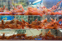 Fresh prawn (I love landscape) Tags: fresh fish ice lobster food sea raw shop marine seafood alive prawn crustacean nature show shrimp healthy head market sale freshness wild nutrition cooking restaurant seoul korea south ocean tasty ingredient meat store menu protein selling supermarket tiger selection