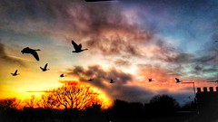 Flying home 😀 (LeanneHall3 :-)) Tags: sunset fierysunset rooftop chimney geese flyinggeese skyscape sky clouds yellow orange blue pink birds landscape samsung galaxys7edge