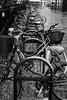 Snowy bikes in Cambridge (tercrossman87) Tags: canon ftb ql ilford hp5 400 1600 push ilfotec lc29 119 home development film plustek 8200i 50mm 18