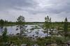 Finnisches Moor (schnoogg) Tags: finnland landschaft moor moorlandschaft sumpf sumpflandschaft uutela landscape marsh swamp fi