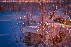 20171227-20171227-BB7A0144-HDR-Edit.jpg (rethwyll) Tags: blue caledonia christmas gold michigan rock sunset weeds