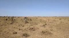 2017-12-28 15.23.22 (dcwpugh) Tags: travel nairobi kenya safari nairobinationalpark