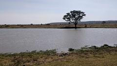 2017-12-28 15.18.48 (dcwpugh) Tags: travel nairobi kenya safari nairobinationalpark