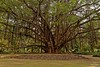 Tarzan (benallalmourad) Tags: nature arbres tree forest texture hiver winter algeria algiers parc park vegetation nikon tamron sigma ombre beauté landscape root evasion arts argel trip patrimoine beauty albero trapano parco natura