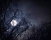 Wolf Moon - New Years Day 2018 (Photo-man50) Tags: wolfmoon supermoon newyearsday 2018 moon bluemoon