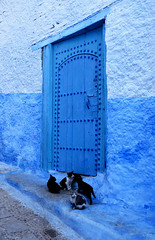 chats Chechaouen Maroc_1551 (ichauvel) Tags: chats cats félins animaux animals portebleue bluedoor porte door mur wall exterieur outside maroc morocco chefchouen chaouen chechaouen magrebnrif rue street médina afriquedunord northafrica voyage travel tourisme tourism novembre november jour day getty