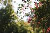 Metochi Kykkou Gardens  (28) (Polis Poliviou) Tags: environment relax relaxing calming cyprus life living enjoyable colour colourful mediterranean travel walking trekking rural countryside agricultural winter flowers plant floral flora winterblossom botany bulbs landscape green white wallpaper herbs naturepics naturephotography beautyinnature cyprustheallyearroundisland cyprusinyourheart yearroundisland zypern republicofcyprus κύπροσ cipro кипър chypre ©polispoliviou2018 polispoliviou polis poliviou πολυσ πολυβιου metochikykkoy kykkos olive monastery christianity