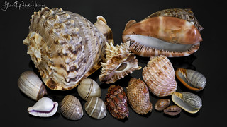 Worldwide seashells
