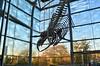 The Wrath Of The Ohjeezasaurus (MPnormaleye) Tags: dinosaur fossil prehistoric skeleton museum exhibit creature window polarized 24mm urban city gallery utata