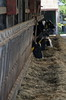 Hungry Cows (pokoroto) Tags: hungry cows animal bicycle trip across kyushu 9月 九月 長月 くがつ kugatsu nagatsuki longmonth 2017 平成29年 fall autumn september ōitaprefecture 大分県 九州 日本 japan