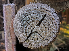 21 dicembre 2017 (adrianaaprati) Tags: rosette ice december embroidery tree trunk white park outdoors winter beauty circles frost frosting crystals cold frosty fencepost
