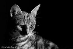Jenni Fur (ambeizzi) Tags: blackwhite jen jennifer jenny jenni fut car pretty kitten kitty pussy monochrome black white