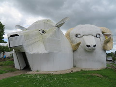 2017-110642 (bubbahop) Tags: 2017 newzealand tirau architecture dogs building corrugated metal sheep