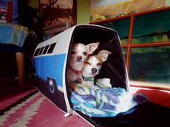 vw bus dog carrier (EllenJo) Tags: vw volkswagen van dogcarrier hazel simon pets travelcarrier hammacherschlemmer december25 2017 christmasgift