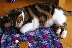 Brian Christmas Wrapping (zawtowers) Tags: brian cat kitty cute feline adorable christmas december 2017 relaxed content happy festive afsnikkor50mmf18g 50mm fifty playing wrapping paper blue lying down