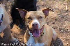 Sandy Creek Park 2 (venusnep) Tags: sandycreekpark sandy creek park dogpark dog privatedogpark pack gpack athens georgia ga athensga november 2017 nikond610 nikon d610