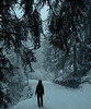 Snowy paths in the French Alps (Capchure.ch) Tags: snow mountains paths forest hike alps alpine fog mist fir winter