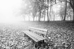 """fine art black & white moody shot of a bench against autumn leaves and misty trees, October in Cotes de Grace, near Honfleur, Normandy, France (grumpybaldprof) Tags: """"lachapellenotredamedegrâce"""" """"côtedegrâce"""" equemauville """"montjoli"""" 1615 """"replacedpreviouschapelfoundedin1025"""" church chapel chapelle honfleur normandy normandie france calvados bw blackwhite """"blackwhite"""" """"blackandwhite"""" noireetblanc monochrome """"fineart"""" ethereal striking artistic interpretation impressionist stylistic style contrast shadow bright dark black white illuminated mist fog bench trees branches mood moody atmosphere canon 70d """"canon70d"""" sigma 1020 1020mm f456 """"sigma1020mmf456dchsm"""" """"wideangle"""" ultrawide park seat autumn"""