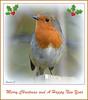 Merry Christmas (Eleanor (No multiple invites please)) Tags: christmascard robin vignette garden stanmore uk nikond7200 november2017