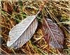 Herbst trifft Winter / autummn meets winter (Christoph Bieberstein) Tags: tschechien tschechische republik böhmen nordböhmen czech republic bohemia ceská republika blätter raureif eis rosenberg