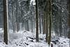 Winterwald / winter forest (Karsten Höhne) Tags: bäume eis felsen forst gipfel herbst hornbadmeinberg kälte lippe lippischevelmerstot naturschutzgebiet nebel regen schnee silberbachtal steine teuteburgerwald tour wald wanderweg winter