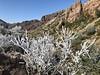 Lost Mine Trail (Manue@PrettyKiku) Tags: lostminetrail bigbend chisos nationalparks westtexas newyeardday 2018 jan18