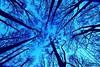 (mf.flaherty) Tags: tokina1116mm d7100 nikon trees