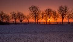 Winter Sunrise (Peter Quinn1) Tags: sunrise lineoftrees sheffield peakdistrict sheephillroad december winter wintersunrise