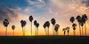 Happy New Year 2018 (David Colombo Photography) Tags: palmtrees sunset color vibrant silhouette trees palms yellow blue clouds landscape sandiego california davidcolombo davidcolombophotography outdoor southerncalifornia happynewyear