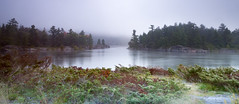 Morning on the French (aT0Mx) Tags: water fog river bushes green red frenchriver provincialpark ontario canada pentaxcamera pentax pentaxda nature naturephotography landscape misty