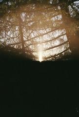 sunset at land park / (luustra) Tags: fuji film superia 800 canon ft ql california