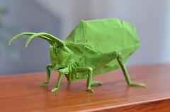Katydid ([~Nic]) Tags: katydid insect insects nicolas gajardo henriquez origami grasshopper