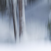 zwei Baumstämme. Idealisiert. (zeh.hah.es.) Tags: icm intentionalcameramovement winter wald forest davos graubünden grischun schweiz switzerland baum tree schnee snow weiss white grün green grau gray grey zwei two baumstamm