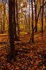 Late October (Ennev) Tags: 2017 pentax pentaxk3ii color colour fall leaves montreal oranges parcdumontroyal tree montréal québec canada ca