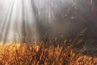 0653 Morning Light