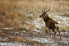 Stag in Winter (fearghal breathnach) Tags: stag winter glendalough wicklow wicklowmountains wildlife deer canon